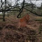 Asverstrooien-op-Delhuyzen-5-februari-2019-2