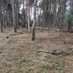 Asverstrooien-in-de-natuur-Delhuyzen-23-januari-2018-5-600x450